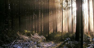 Geschichte der Forstwirtschaft im Schönbuch bei Tübingen, Böblingen, Herrenberg