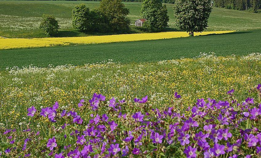Wandern Biosphärengebiet Schwäbische Alb - Wanderungen im Frühlingen